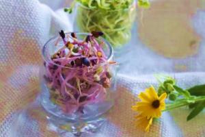 brotes de brocoli col lombarda para ensaladas salteados