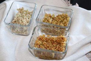 semillas de fenogreco de judias mung  lentejas brotando en boles para ensalada