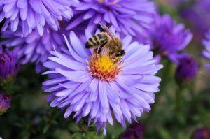 el polen de abeja